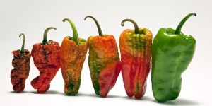 Revigorarea legumelor