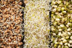 Cereale germinate
